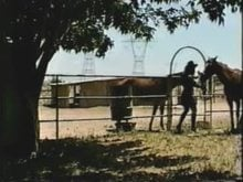 Horse Thief Caught and Trained as Pony Girl