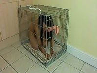 Caged pet girl training
